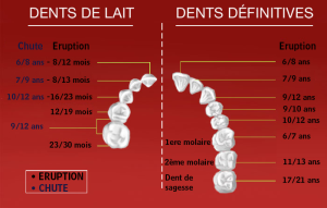 DENTS DE L'ENFANT, DENTS DE L'ADULTE
